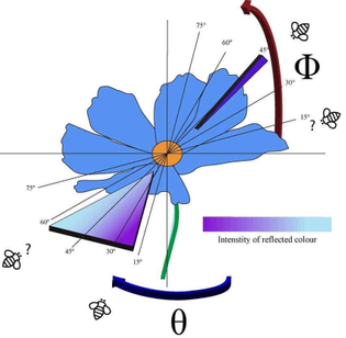 Diagram depicting a hypothetical flower whose color is the result of angle dependent and independent colors