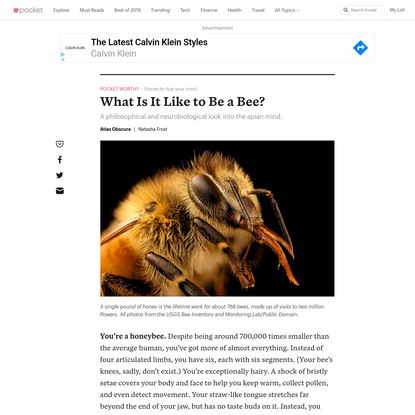 What Is It Like to Be a Bee? - Atlas Obscura - Pocket