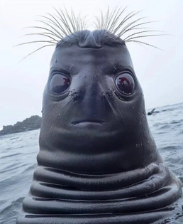obsessed with this picture of a seal looking up