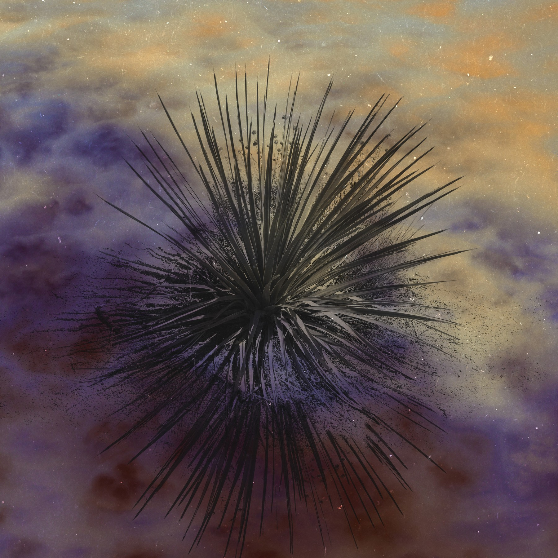 Universe for a Palm Tree