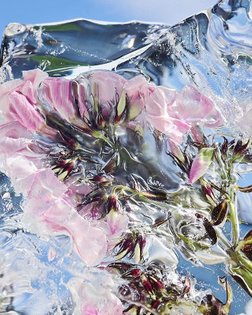 Florian Joye /////////////////// #florianjoye . . . . #art #artist #photographer #photo #photography #flowers #flower #fashion