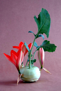 andreas-verheijen-developed-hybrid-plants-and-colorful-flower-arrangements-19-806.jpg