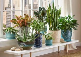 House Plants POTTING