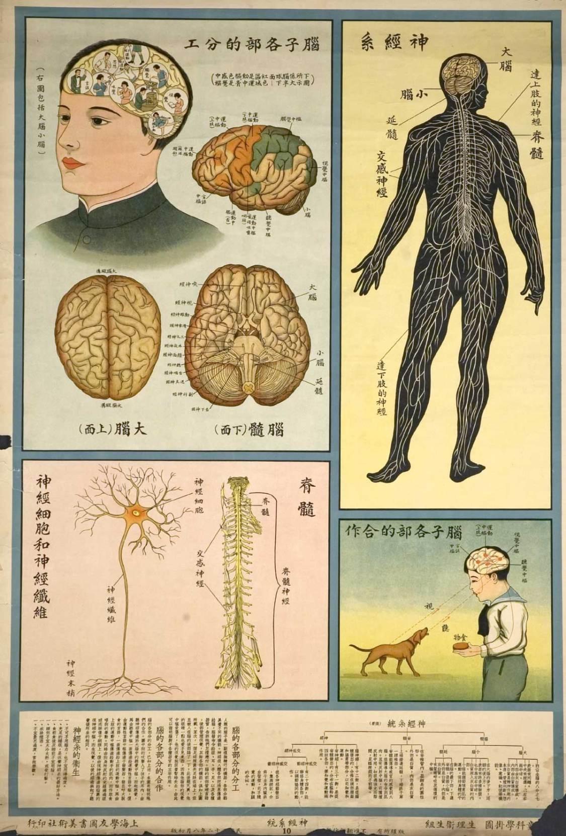 understanding-the-human-body-public-health-posters-1933-3.jpg