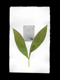 Herbarium + dry needle