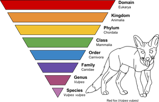 1920px-taxonomic_rank_graph.svg.png