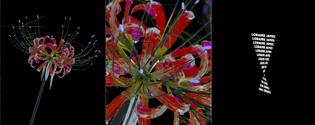 bildschirmfoto-2020-02-18-um-09.25.52.png