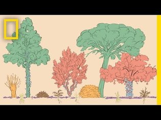 A Forest Garden With 500 Edible Plants Could Lead to a Sustainable Future   Short Film Showcase