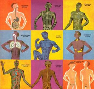 humanbody13.jpg?w=600-ssl=1