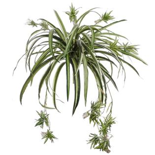 larpsilk-realistic-60-frond-spider-foliage-plant.jpg