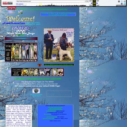 Afghan Hounds AFGHAN HOUNDS and AAAWWW Web Design hosting