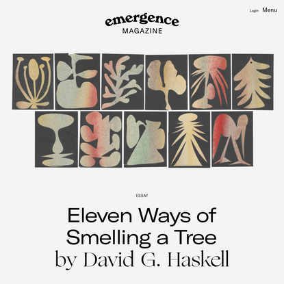 Eleven Ways of Smelling a Tree - Emergence Magazine