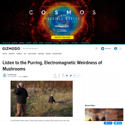 Listen to the Purring, Electromagnetic Weirdness of Mushrooms