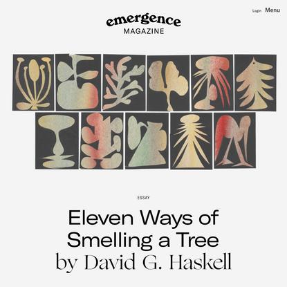 Eleven Ways of Smelling a Tree - Emergence Magazine