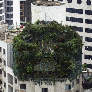 Two illegally built penthouse floors disguised as a greenhouse in Guangzhou