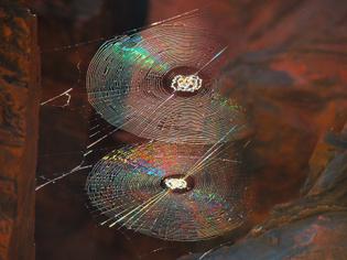 Spiral_Orb_Webs.jpg