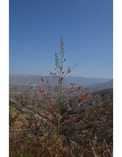 tpf-delphinium-cardinale-scarlet-larkspur-seed.jpg
