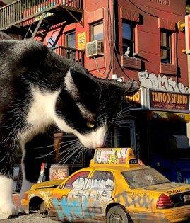 Catzilla 😂😂😂 #cat #cats #miniature #miniatures #scalemodel #scale #scalemodelsworld #scalemodelling #newyork #nyc #graffiti ...