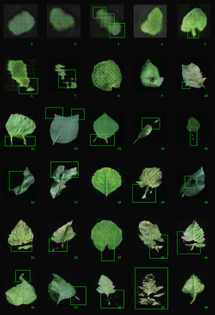"""A grid of machine generated leaves. The leaves are dark green against a black background. On top of the leaves are bright neon green markings pointing out the """"glitches"""" or flaws of each leaf."""