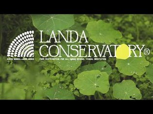 Landa Conservatory | Soft Rain As Dusk Approaches (Visual Meditation)