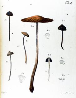 botanical-mushroom-1783-2.jpg?w=700-h=