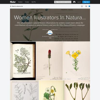 Women Illustrators In Natural History
