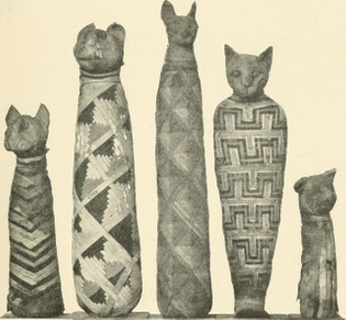 mummified-cats-in-the-natural-history-museum-london.jpg