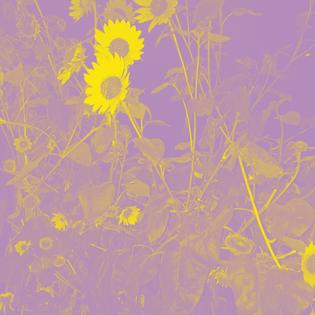 sunflower11.jpg