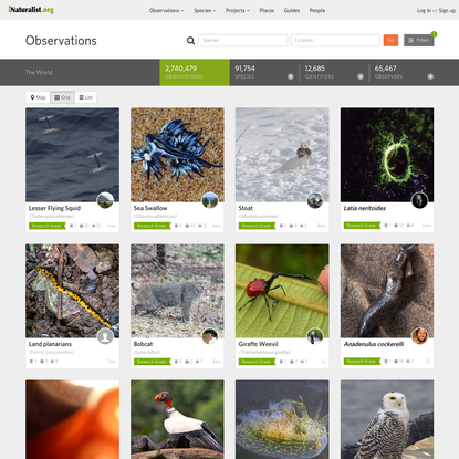 Observations · iNaturalist.org