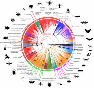 1920px-hexapoda_phylogenetic_tree.png