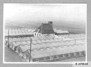 glasshouse-in-rajsko-where-female-prisoners-worked-over-kok-sagiz-1950s-apmab-.6661.jpg
