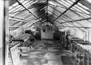 auschwitz-greenhouse.jpg