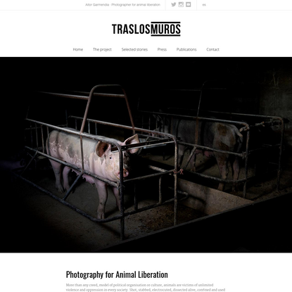 Tras los Muros | Photography & video for Animal Liberation