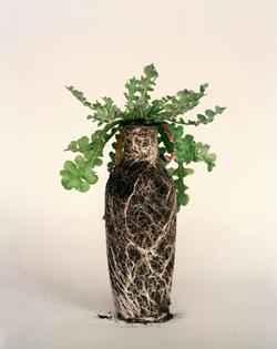 diana-scherer-reveals-soil-seeds-roots-nurture-studies-designbom-08.jpg