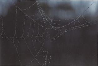 wet-spiderweb.jpg