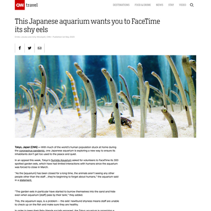 This Japanese aquarium wants you to FaceTime its shy eels