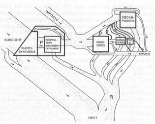 Howard Odum's Ecosystem Diagram