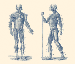The Body as a vehicle