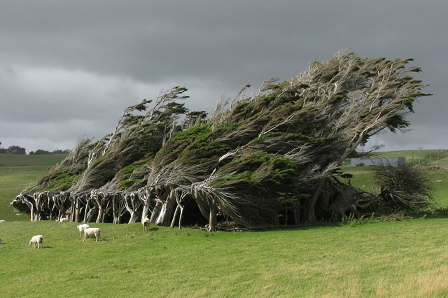 twisted-trees-slope-point-new-zealand-south-island-coverimage.jpg