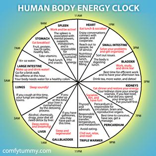 human-body-energy-clock.jpg