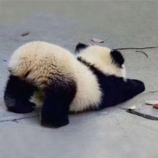 panda stretch
