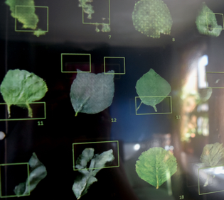 """Close up: A grid of machine generated leaves. The leaves are dark green against a black background. On top of the leaves are bright neon green markings pointing out the """"glitches"""" or flaws of each leaf."""