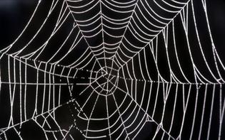 Web Vectors