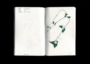 fox-lauren-bloomindex