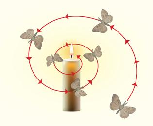 moth_psp_art_09_nocturnal_adaptations_of_moths_mothmovement.jpg