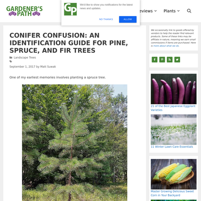 Conifer Confusion: An Identification Guide for Pine, Spruce, and Fir Trees