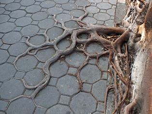 tree-roots-concrete-pavement-18.jpg