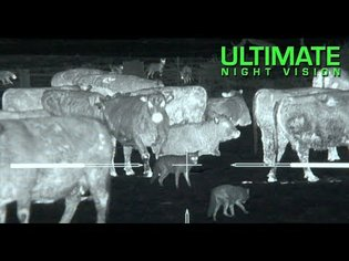 Thermal Predator Hunting   45 Coyotes Down with the IR Hunter MKIII 35mm