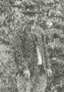 moulinbewoner-1852.jpg
