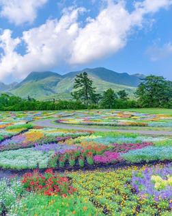 kuju flower park japan